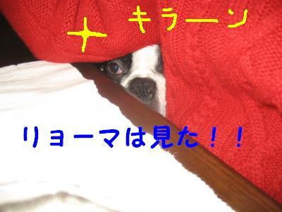 c0092787_1353557.jpg