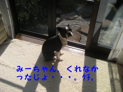 c0092787_1385858.jpg