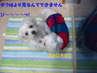 f0005727_16272916.jpg