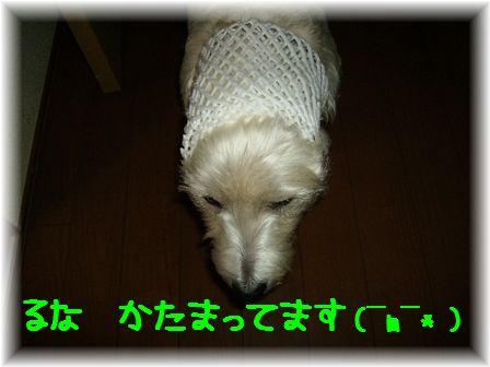 d0080336_1292121.jpg