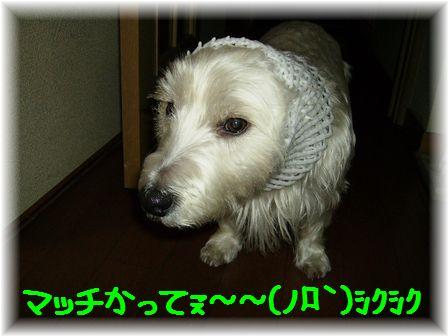 d0080336_1321121.jpg
