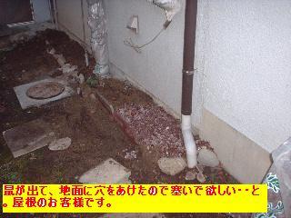 屋根と鼠と賃貸_f0031037_171192.jpg