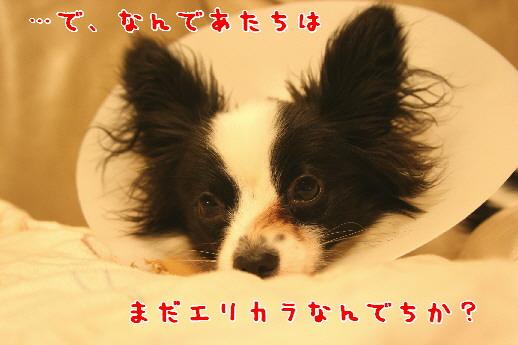 d0013149_0255410.jpg