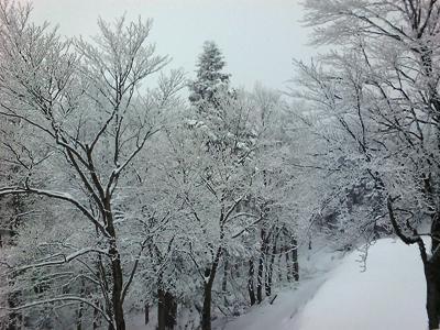 東北スキー等旅行記その10~いよいよスキー!_c0060651_22372620.jpg