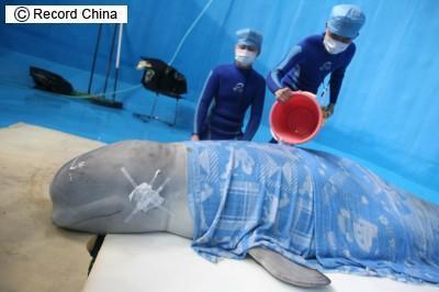 世界初クジラの手術_b0052564_15394955.jpg