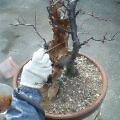 盆栽の手入れ_b0022291_159157.jpg