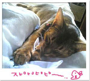 猫の寝言は最高だ_d0084214_0291624.jpg