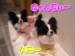 愛 ♡ いちご_b0084929_204080.jpg