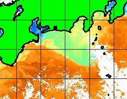 わおーっ!緊急情報でーーす!摩 遠州灘 房総沖に黒潮が差してきています![カジキマグロトローリング]_f0009039_1712826.jpg