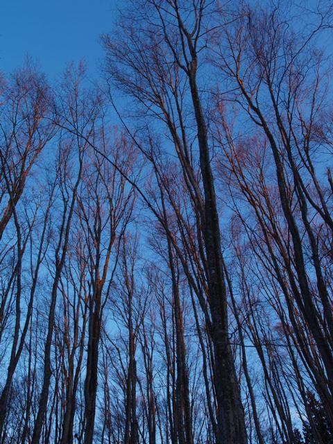 まず、枝が色づく。_a0025576_22403117.jpg