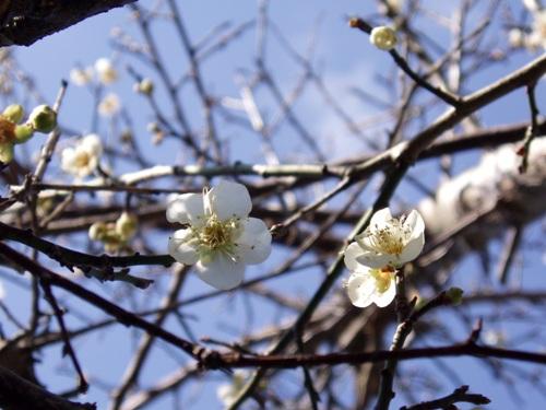 蝶を待つ花たち/1月23日撮影_f0083281_23475854.jpg