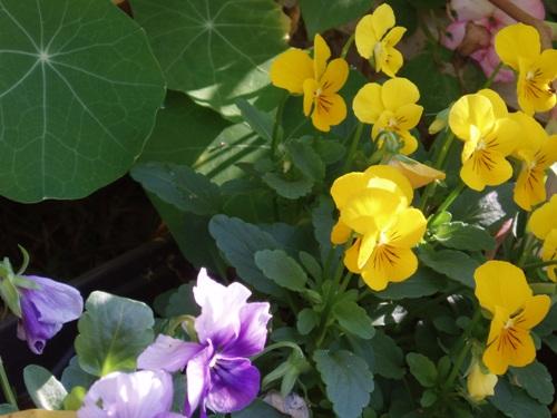 蝶を待つ花たち/1月23日撮影_f0083281_23482799.jpg