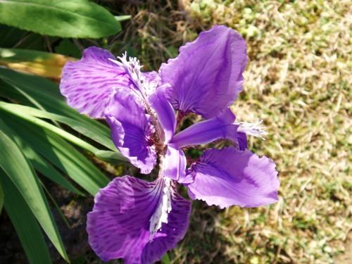 蝶を待つ花たち/1月23日撮影_f0083281_23491531.jpg