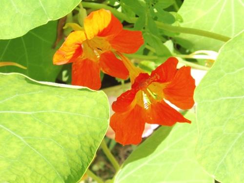 蝶を待つ花たち/1月23日撮影_f0083281_2349352.jpg