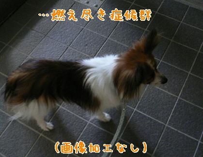 d0013149_1525427.jpg