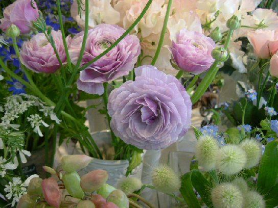 オークリーフ(ただ美しい花)_f0049672_1671469.jpg