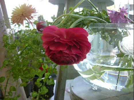 オークリーフ(ただ美しい花)_f0049672_1672759.jpg