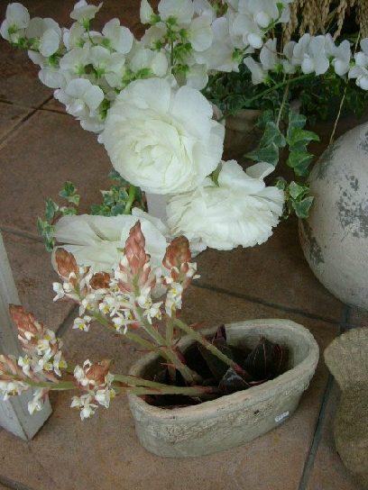 オークリーフ(ただ美しい花)_f0049672_1684442.jpg