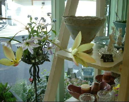 オークリーフ(ただ美しい花)_f0049672_1685548.jpg