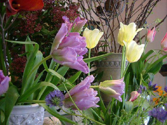 オークリーフ(ただ美しい花)_f0049672_1692369.jpg