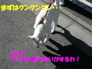 f0121712_10323275.jpg