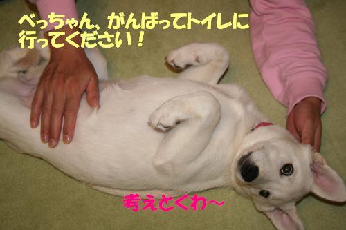 f0121712_20101168.jpg