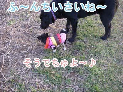 f0114893_1065976.jpg