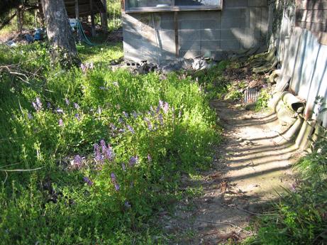 アトリエ熊本とその庭_c0107829_21113475.jpg