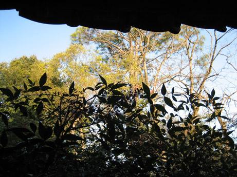 アトリエ熊本とその庭_c0107829_21121729.jpg