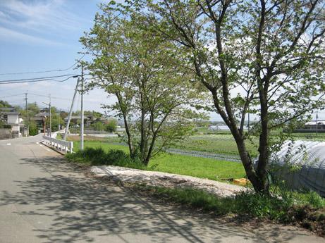 アトリエ熊本とその庭_c0107829_211326.jpg