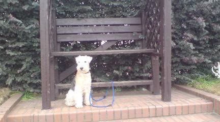 散歩と犬と仕事_c0099133_11411562.jpg