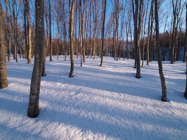 美人林の朝日、その3_a0025576_21215733.jpg