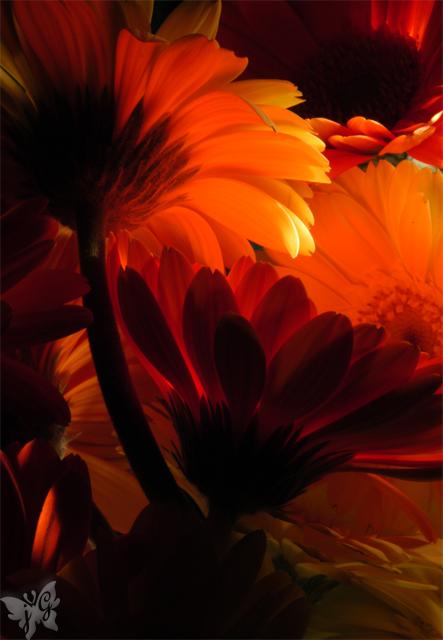 1月の宿題『フィルムの違い』 サブテーマ『花』_b0053900_1243044.jpg