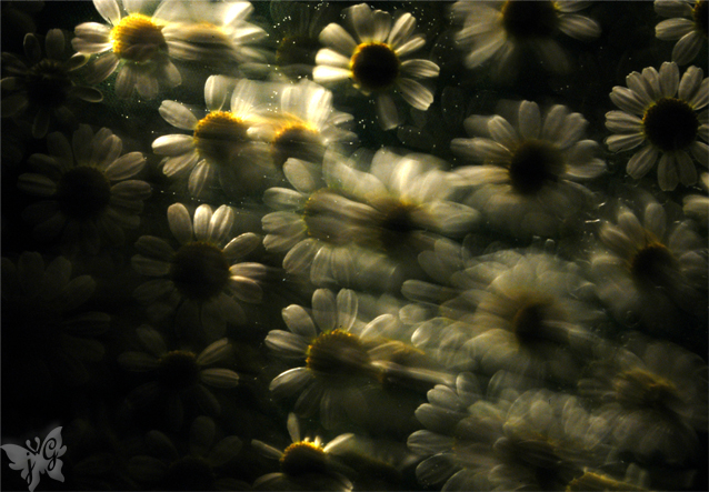 1月の宿題『フィルムの違い』 サブテーマ『花』_b0053900_124427.jpg