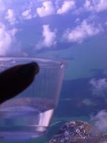 """""""ハローちゃん""""から見たJAMAICAへの空の旅をお楽しみください_e0113805_12261663.jpg"""