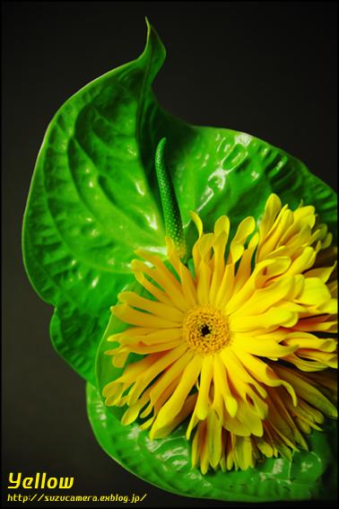 Yellow_f0100215_1028926.jpg