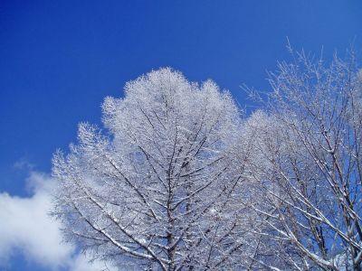 新雪_d0102327_22315365.jpg