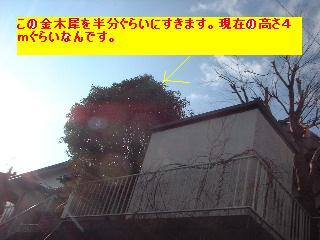 植木の剪定~♪風邪にパブロン・・・ぐはっ。_f0031037_15421151.jpg