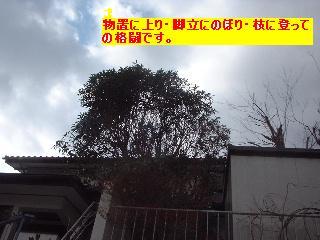 植木の剪定~♪風邪にパブロン・・・ぐはっ。_f0031037_15421929.jpg