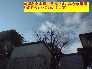 植木の剪定~♪風邪にパブロン・・・ぐはっ。_f0031037_1542272.jpg