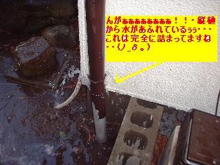 植木の剪定~♪風邪にパブロン・・・ぐはっ。_f0031037_15431158.jpg