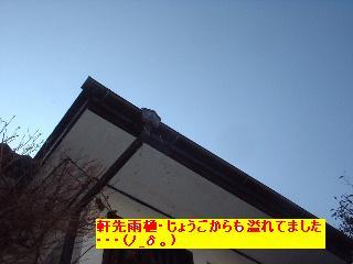 植木の剪定~♪風邪にパブロン・・・ぐはっ。_f0031037_15432246.jpg