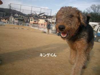 b0090938_20105759.jpg