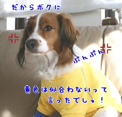 d0013149_1113131.jpg