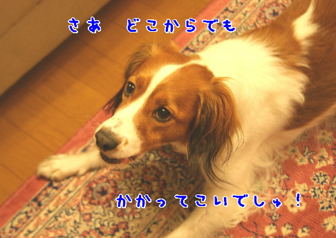d0013149_1145248.jpg