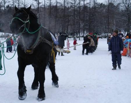 ばん馬と人間との綱引き対決_b0052564_11383265.jpg