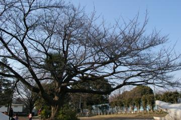 冬から春へ_e0095468_17124862.jpg