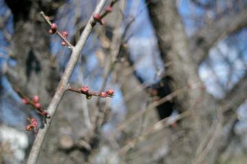 冬から春へ_e0095468_17191962.jpg