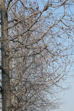 冬から春へ_e0095468_1793440.jpg