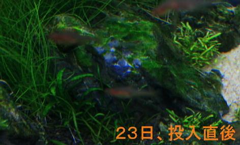 d0090170_1519055.jpg